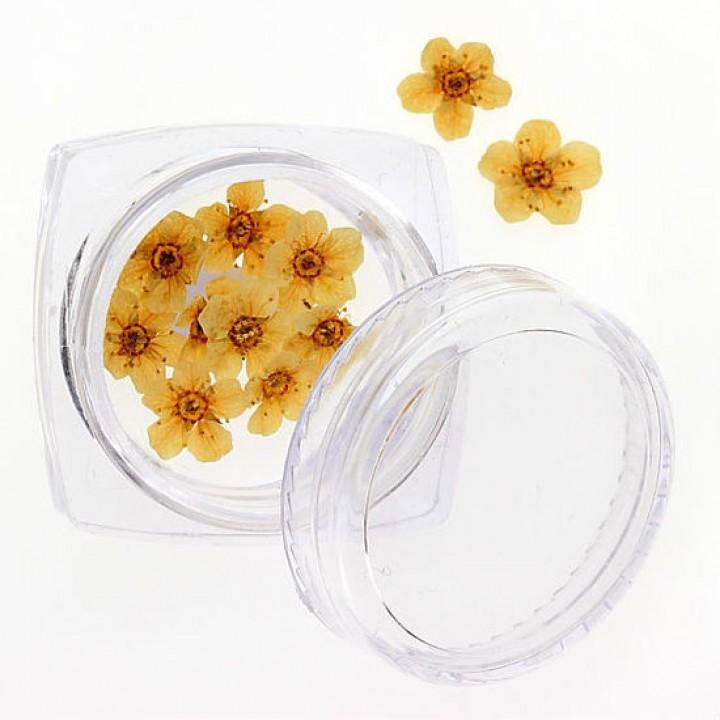 Сухоцветы для дизайна №105