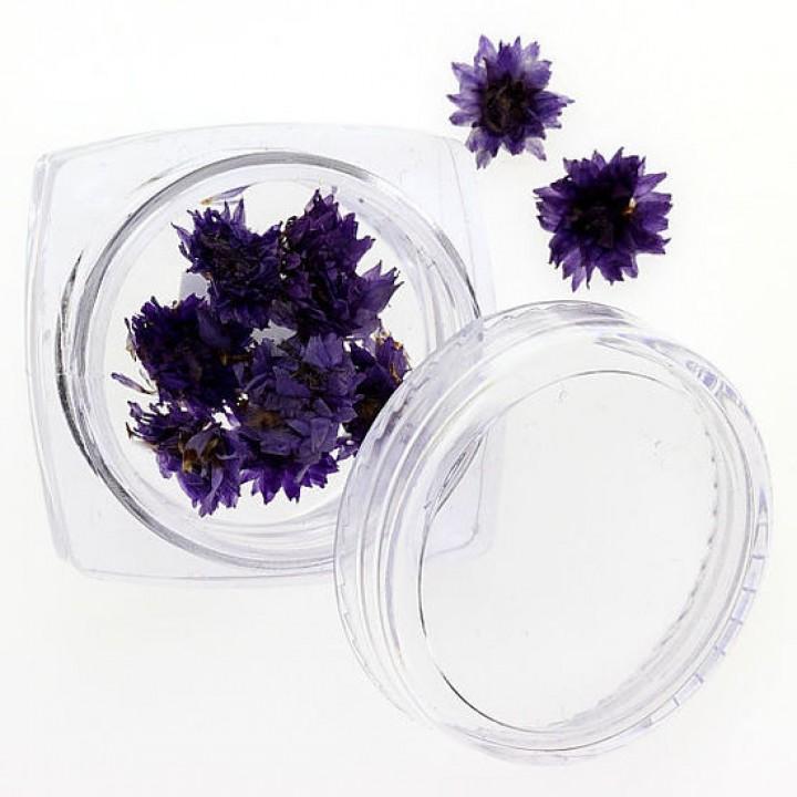 Сухоцветы для дизайна №108