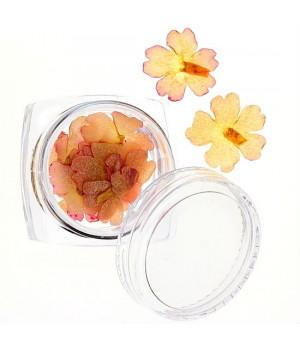 Сухоцветы №25
