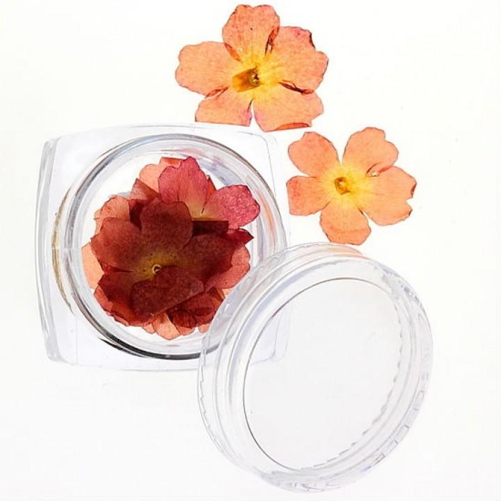 Сухоцветы для дизайна №29