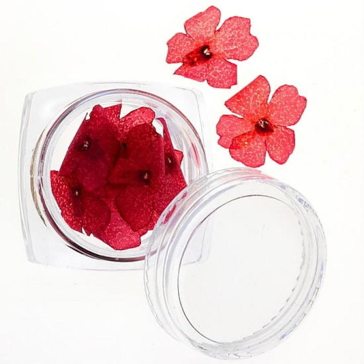 Сухоцветы для дизайна №30