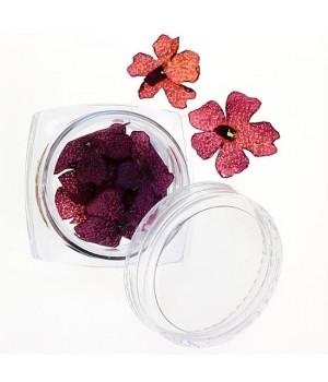 Сухоцветы №33