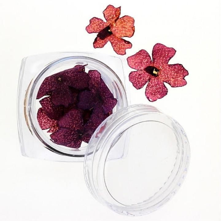 Сухоцветы для дизайна №33