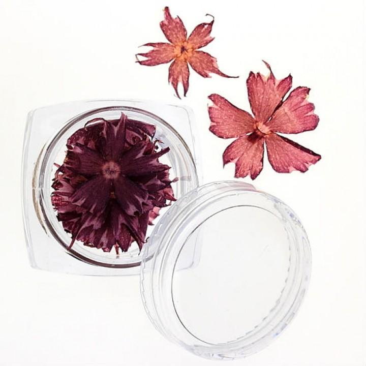 Сухоцветы для дизайна №35