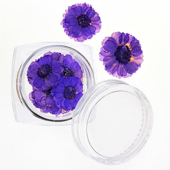 Сухоцветы для дизайна №36