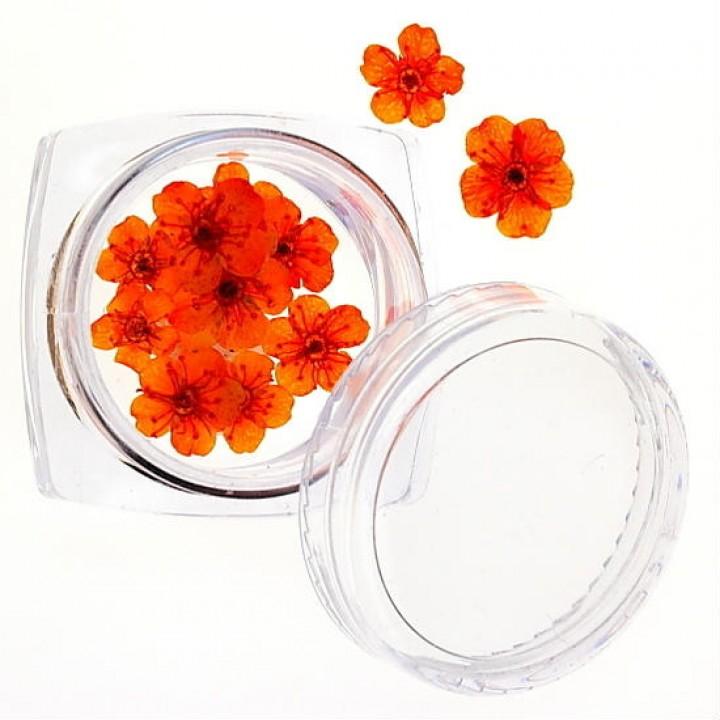 Сухоцветы для дизайна №38