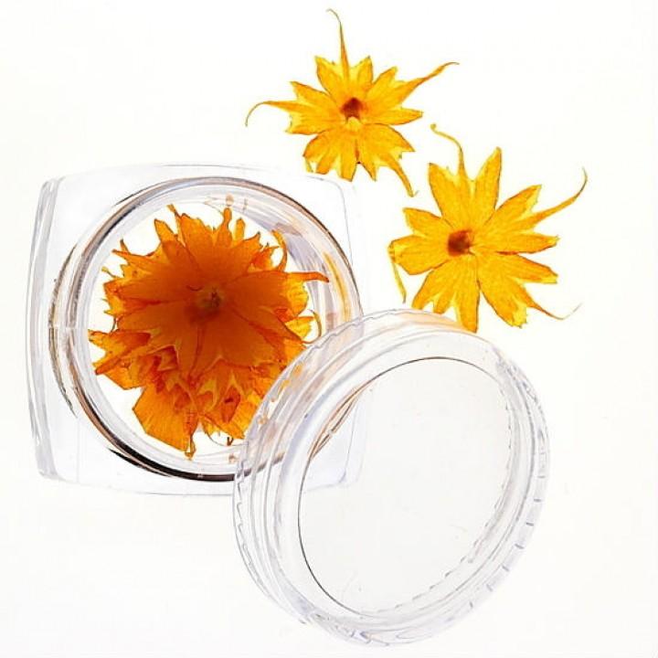 Сухоцветы для дизайна №41