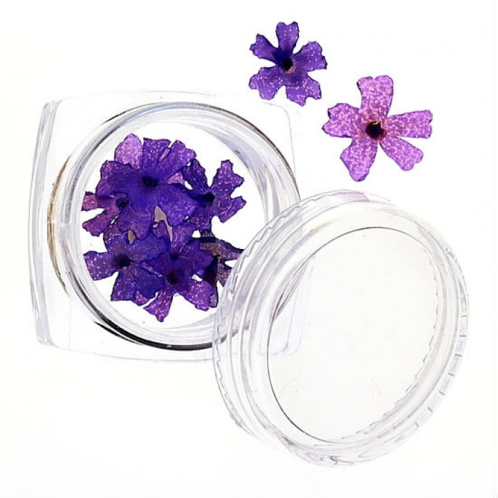 Сухоцветы для дизайна №44