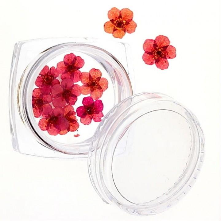 Сухоцветы для дизайна №47