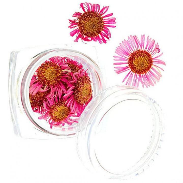Сухоцветы для дизайна №52