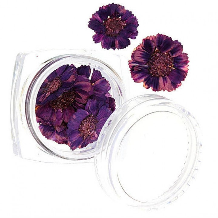 Сухоцветы для дизайна №53