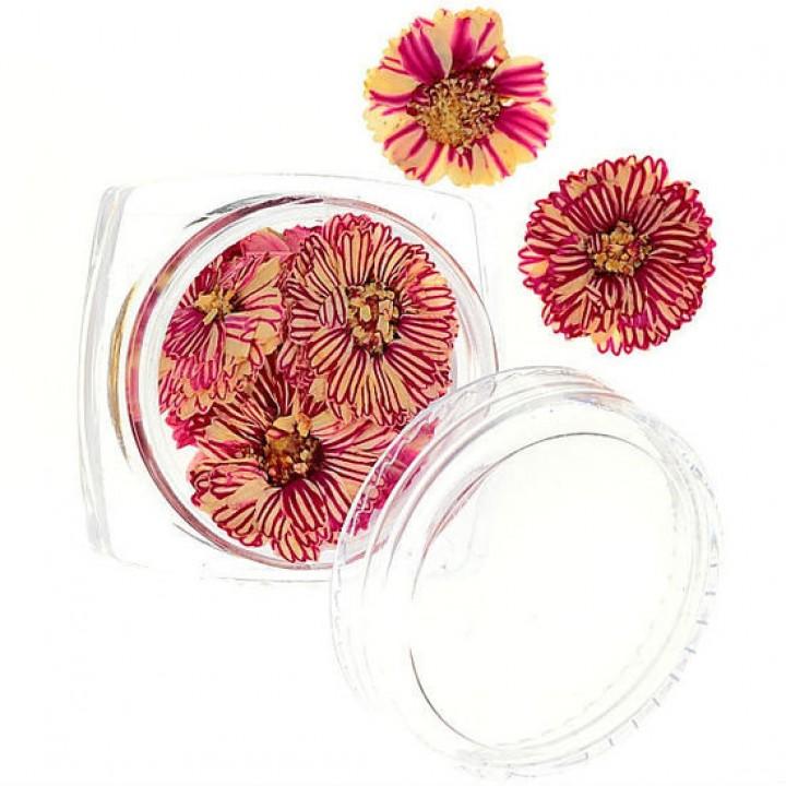 Сухоцветы для дизайна №54