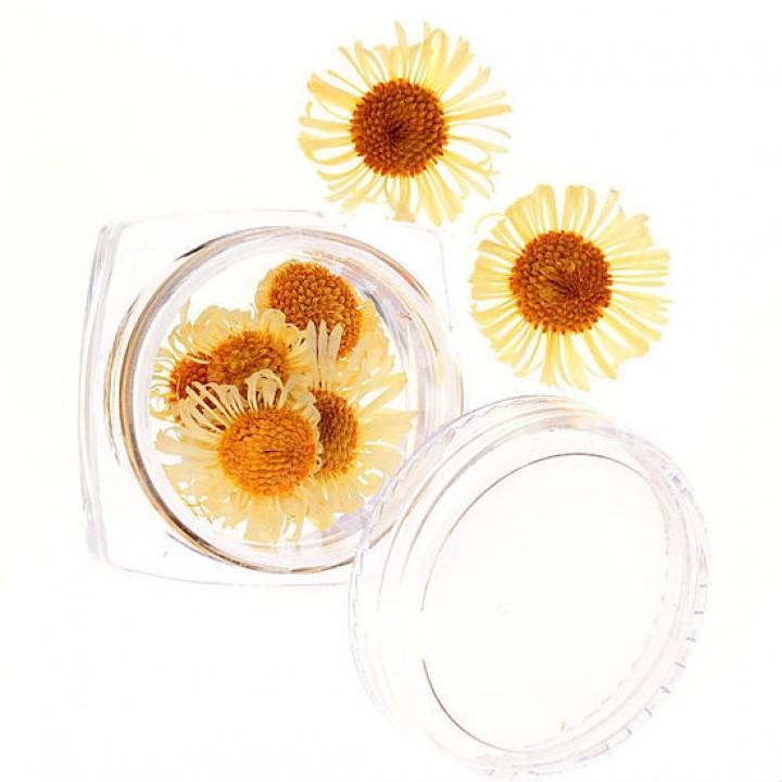 Сухоцветы для дизайна №57