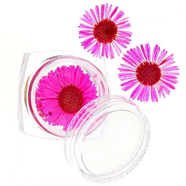 Сухоцветы для дизайна №58