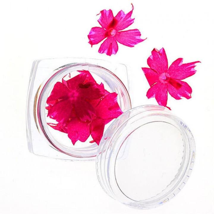 Сухоцветы для дизайна №62