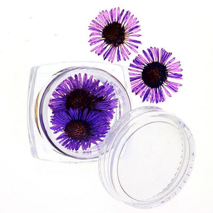 Сухоцветы для дизайна №63