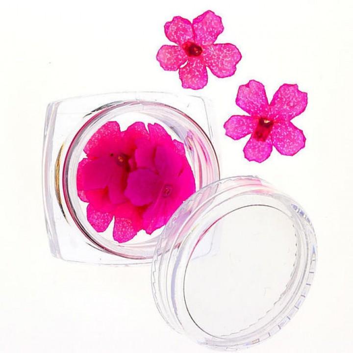 Сухоцветы для дизайна №64