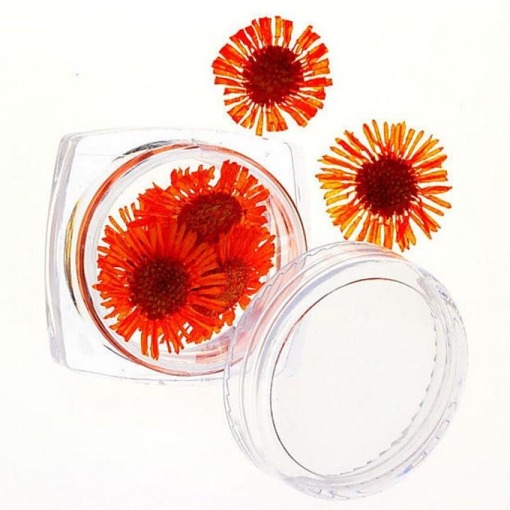 Сухоцветы для дизайна №65