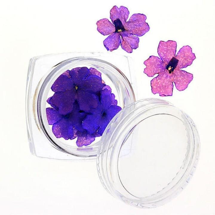 Сухоцветы для дизайна №67