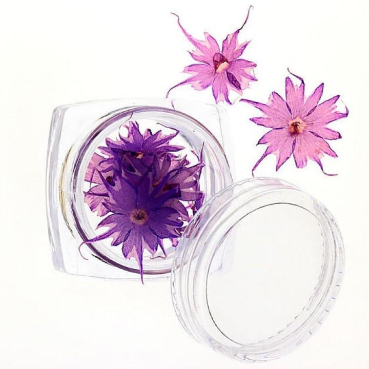 Сухоцветы для дизайна №69