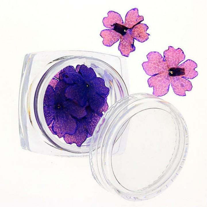 Сухоцветы для дизайна №71