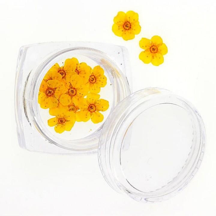 Сухоцветы для дизайна №75