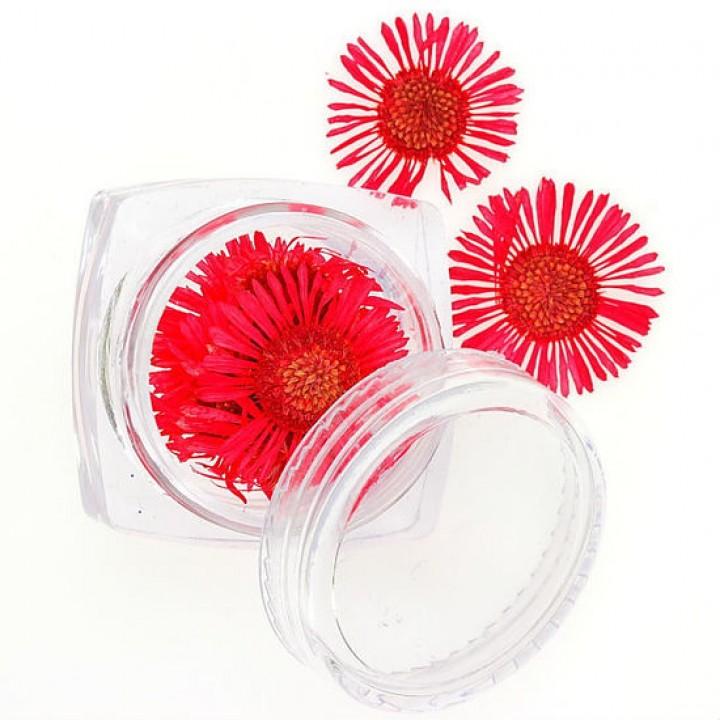 Сухоцветы для дизайна №76