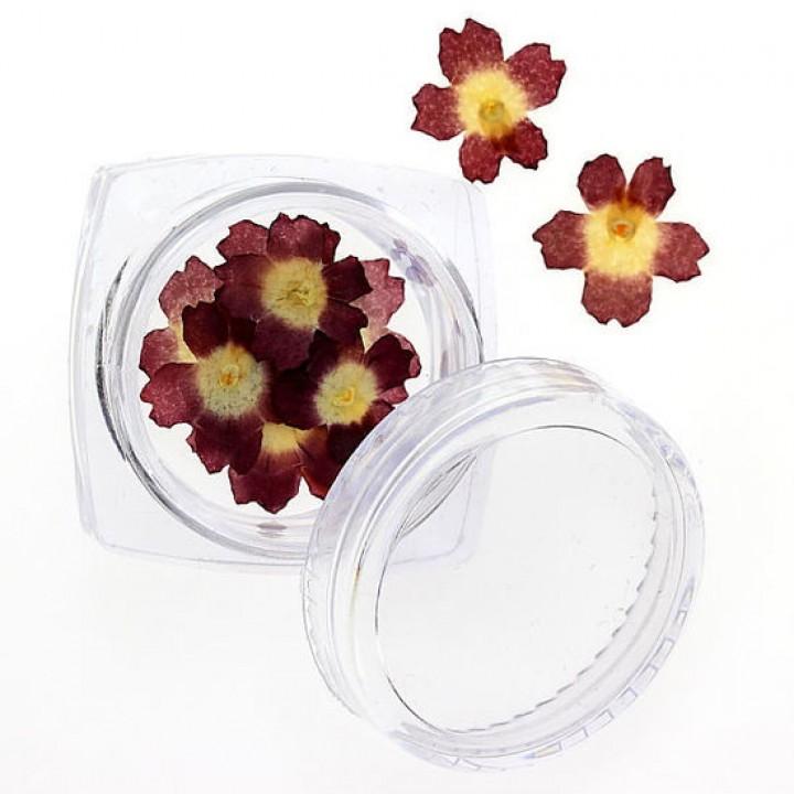 Сухоцветы для дизайна №92