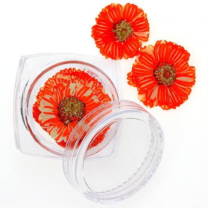 Сухоцветы для дизайна №93