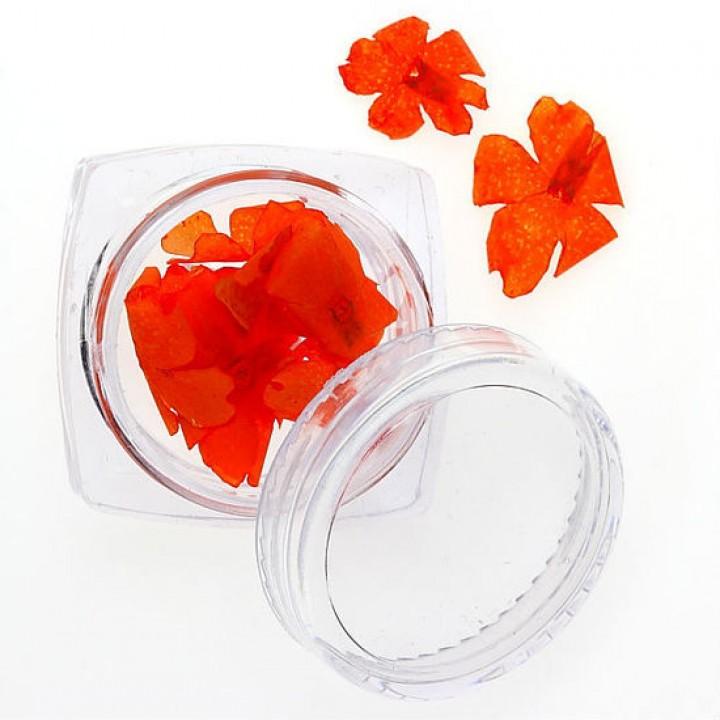 Сухоцветы для дизайна №95