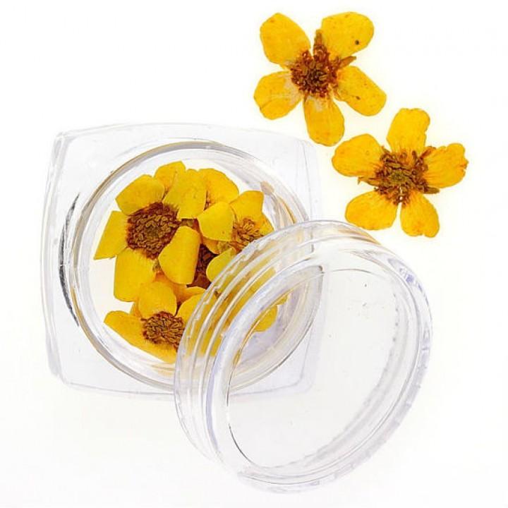 Сухоцветы для дизайна №101