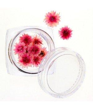 Сухоцветы №31