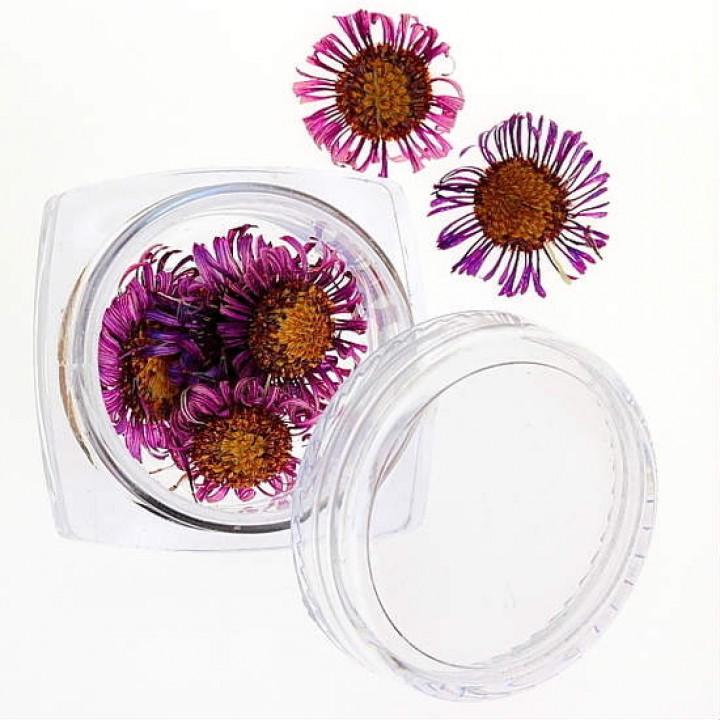 Сухоцветы для дизайна №32