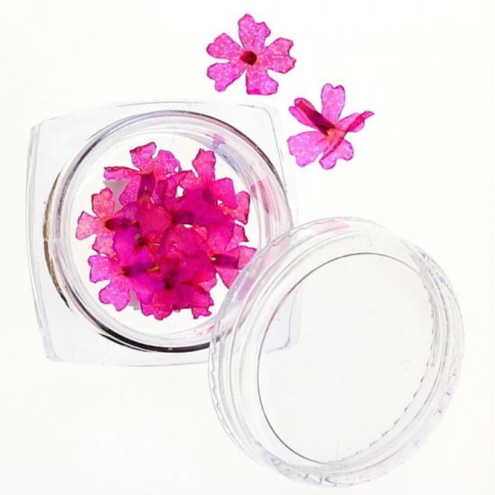 Сухоцветы для дизайна №37
