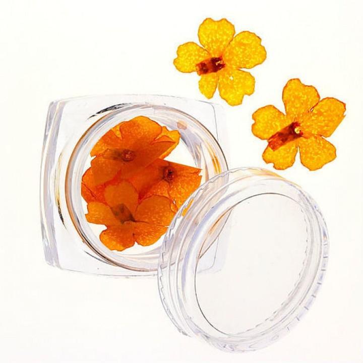 Сухоцветы для дизайна №73